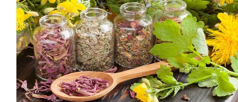 Какие травы снижают аппетит и способствуют похудению